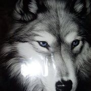Athal Wolf