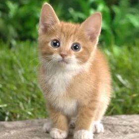 Olivia Kitty