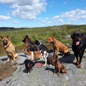 DoggieDog Hundpromenader Hundpensionat