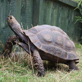 TortoiseClub Org