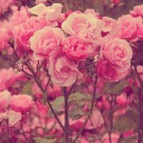 Rose Low