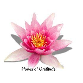 PowerofGratitude