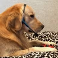 Puppy Gamer