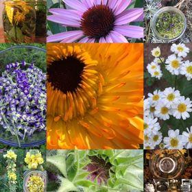 Vanessa's Sunshine Herbals