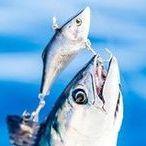 Dana Point Fish Company