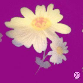 Ella-Rose Smee