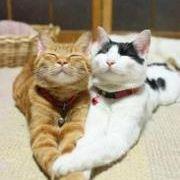 Somppu Meow