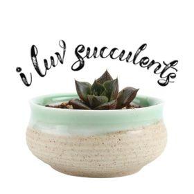 I Luv Succulents