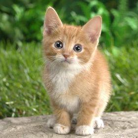 Cute_Kitty