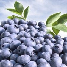 Blueberries from Florida