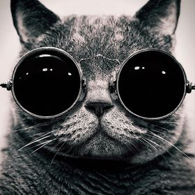 asian kitty mit schwarzen zwerg