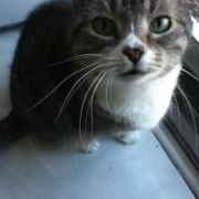Cats Desire Litter Boxes