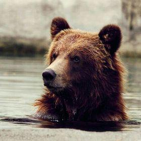 Little Bear 🐻