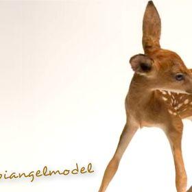 Bambi Angel