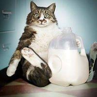 CatsMakeYouSmile