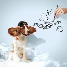 Flying Dutch Pets