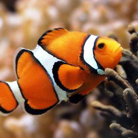The Aquarium Club