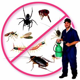 I Remove Pest