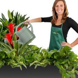 Everything Grows Interior Landscaping