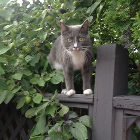 Pastel Kitty