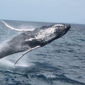 Walflüsterer