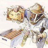 La Familia de la Apicultura - The Beekeeping of Family