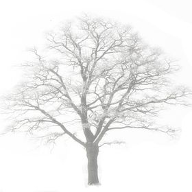 One Oak Designs