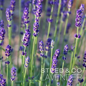 Steed and Company Lavender