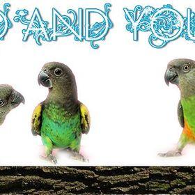 BirdandYou Birdandyou