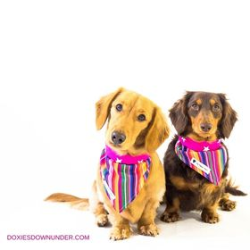 Doxies Down Under