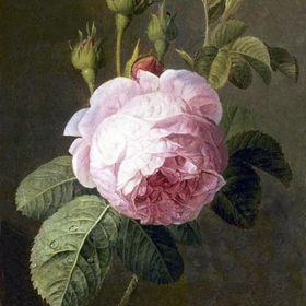Le Monde de Rose