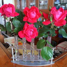 east rose