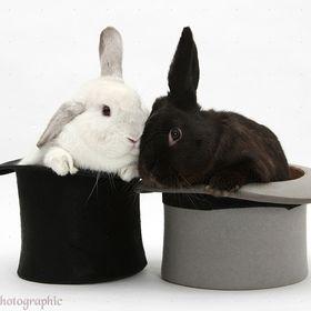 timka rabbit
