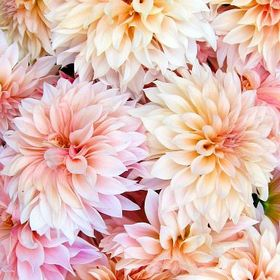 Simply Beautiful Flowers