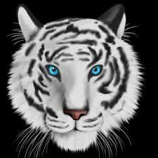 TigerLily64