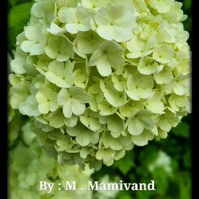 Marzieh Mamivand