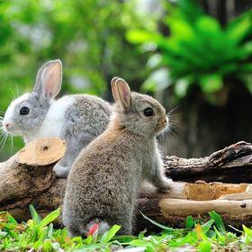 mein.kaninchenprofi