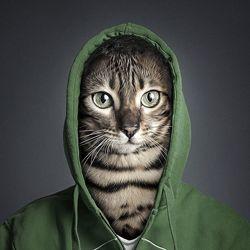 Kopjes Kattenoppas | Cat Sitters Amsterdam