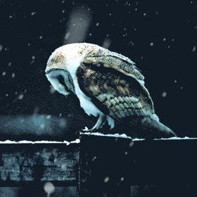 Effie Potter