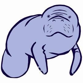 blue manatee