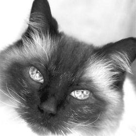 Floppycats.com - Ragdoll Cats + Cat Tips