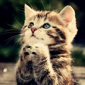 Supercute kitty
