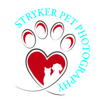 Stryker Pet Photography