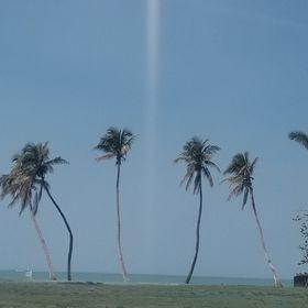 Inspired Paradise