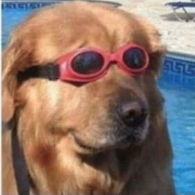 Just a doge in glasses