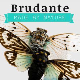 BRUDANTE