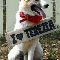 Terezia Terzieva