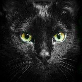 Blackflower Warrior cats