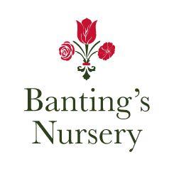 Banting's Nursery