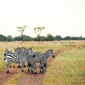 Insight Tanzania